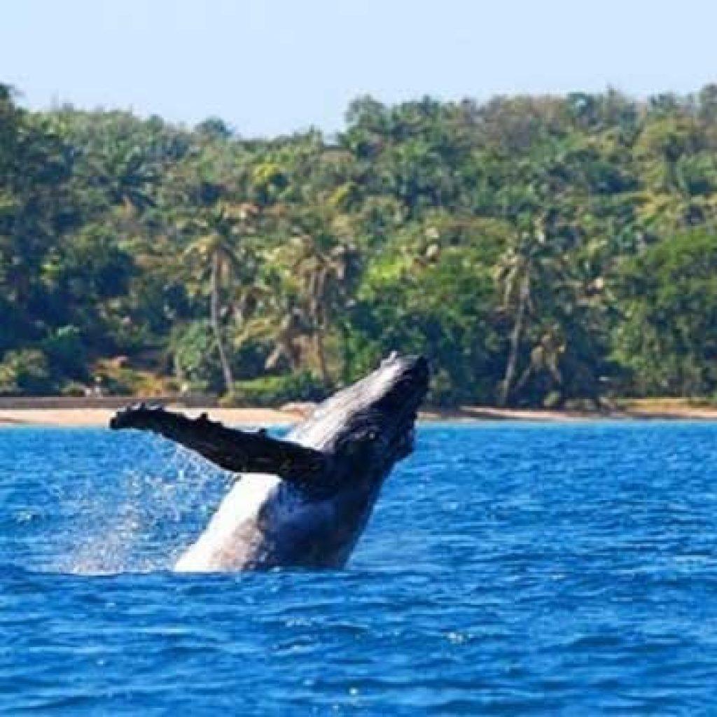 La baleine à l'honneur à Madagascar