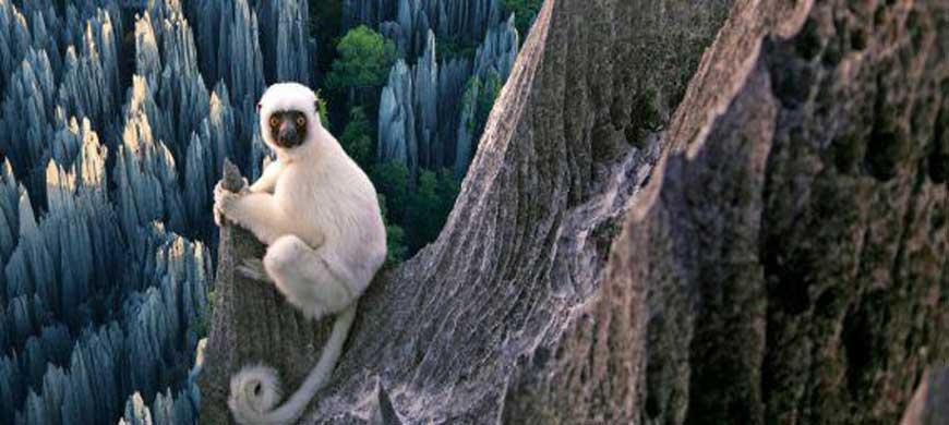 Tsingy De Bemaraha : Une Incroyable Aventure
