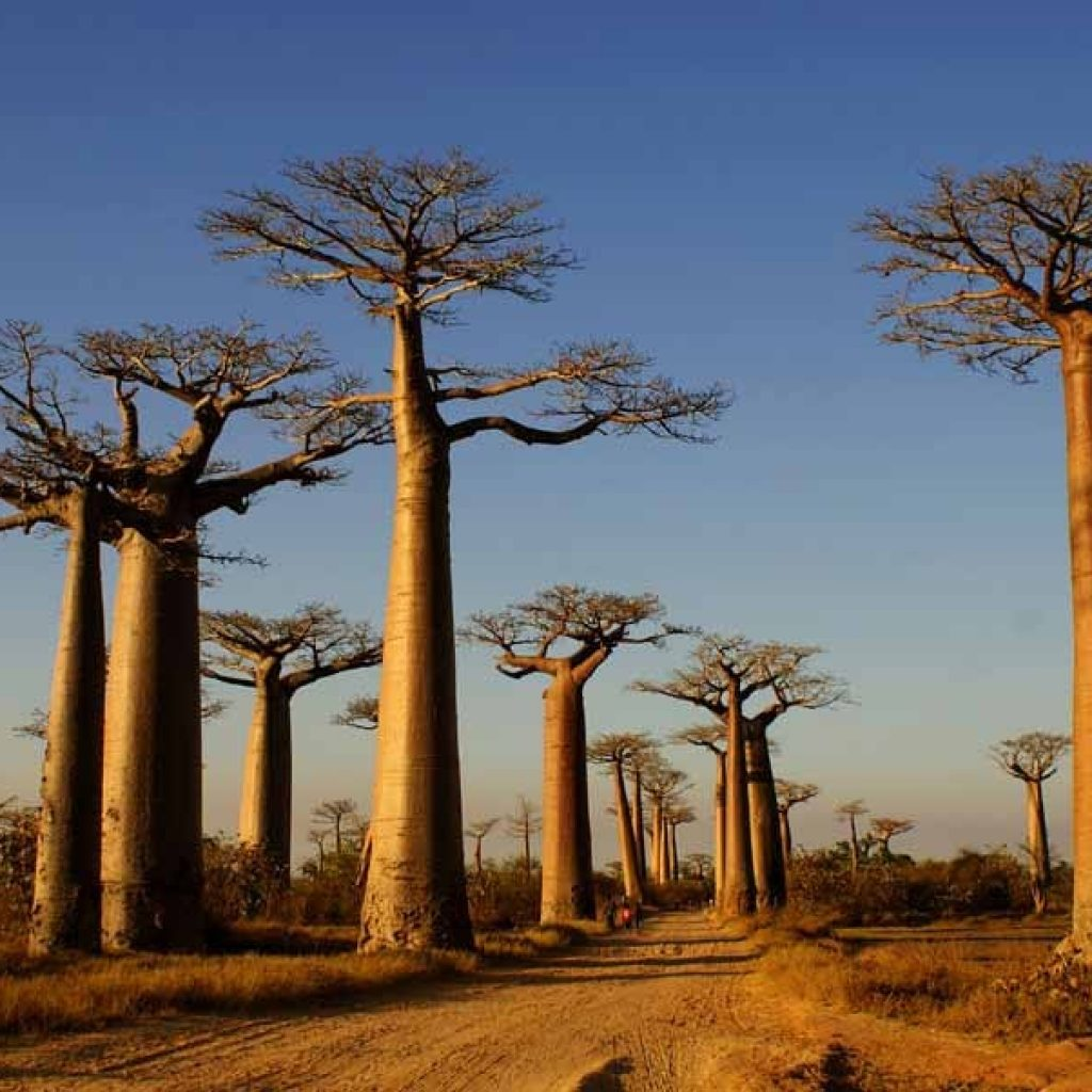 Madagascar: Region Menabe is popular with foreign tourists