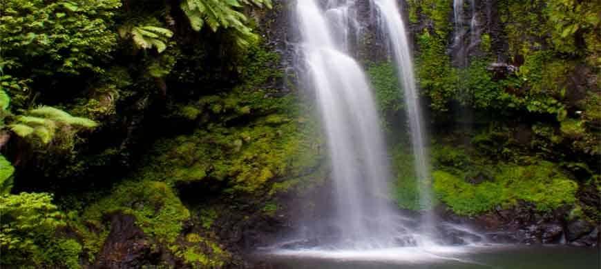Madagascar: le Parc National de la Montagne d'Ambre, un véritable oasis dans le nord