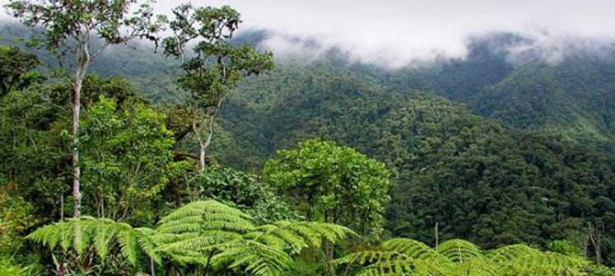Les richesses naturelles du Nord de Madagascar