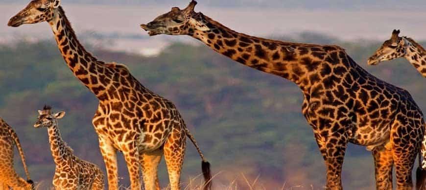 destinations africaines