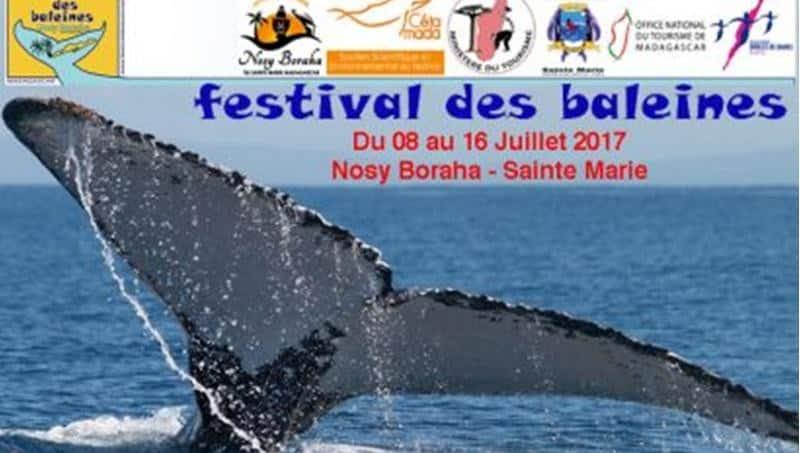 08 au 16 juillet 2017 : Festival des baleines sur l'île Sainte Marie