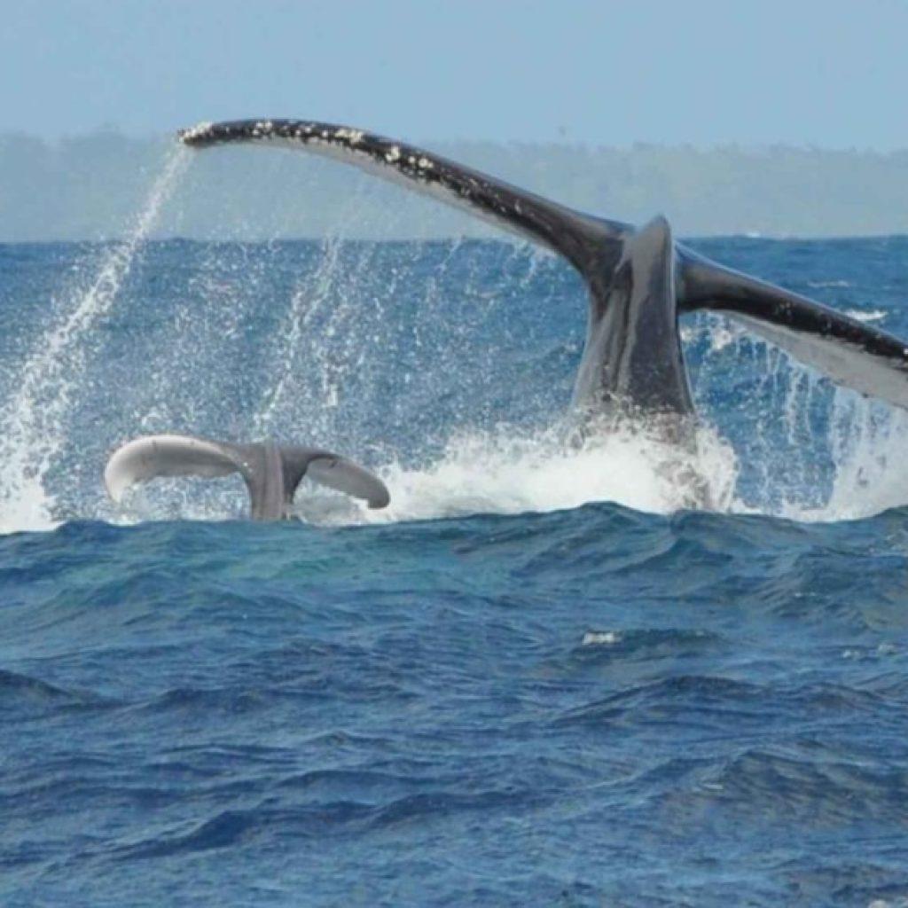 Fliegen Sie nach Sainte-Marie Madagaskar für einen Termin mit Walen
