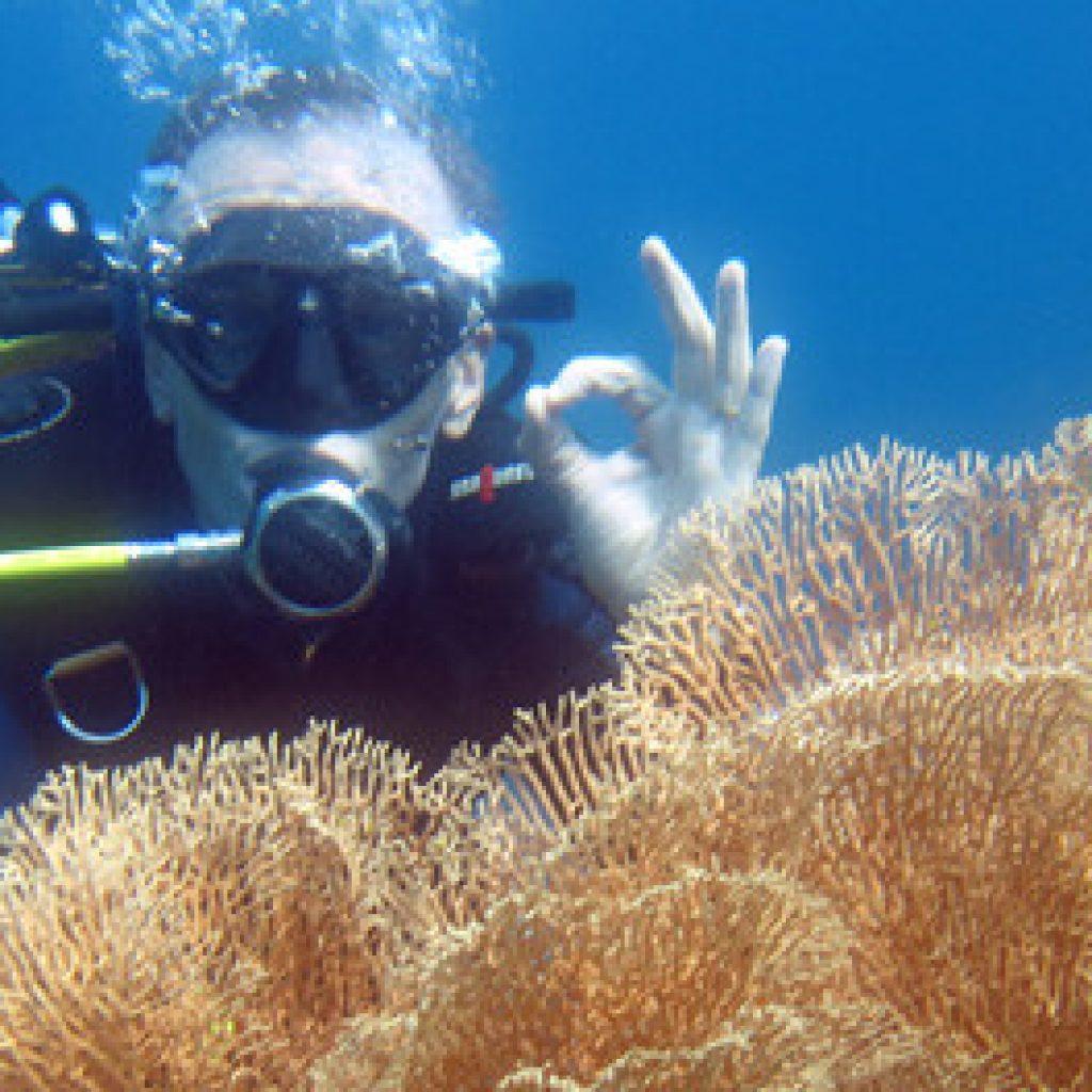 Entdecken Sie die Unterwasserschätze von Sainte-Marie in Madagaskar