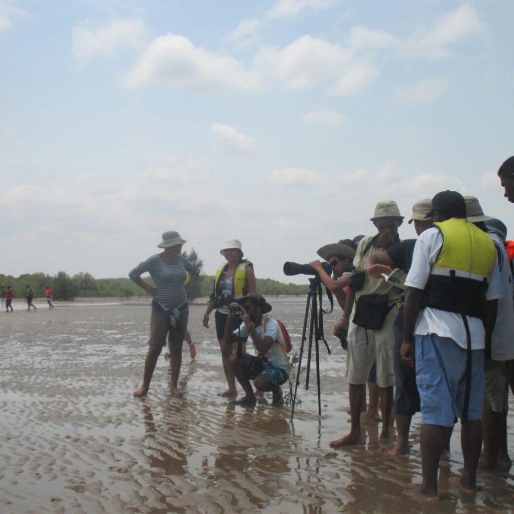 Safari des oiseaux Mahajanga: une nouvelle édition en novembre