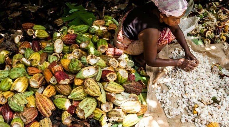1000 choses à faire à Ambanja : les balades dans les belles plantations