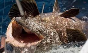 Voyage à Madagascar : se livrer à la pêche au large de Nosy-Be