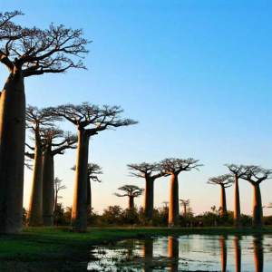 Ouest-Express-Tsingy-et-Baobabs (2)