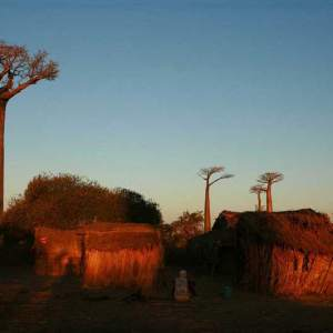 Ouest-Express-Tsingy-et-Baobabs (8)
