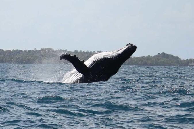 Baleine a boss sainte marie