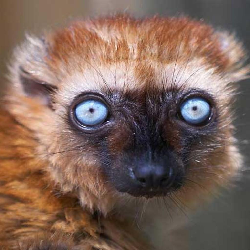 Le tour de Madagascar en quelques mots