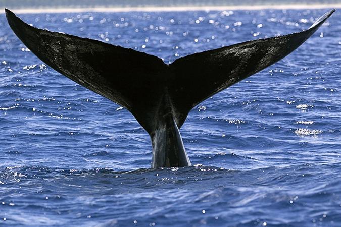 baleines-nosy-be