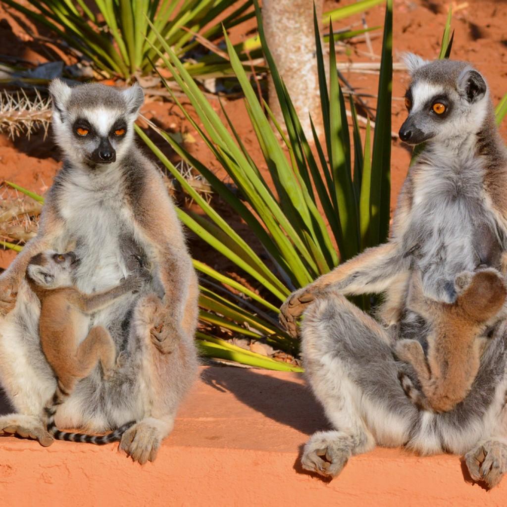 Réserve de Berenty  à Madagascar : Un espace protégé