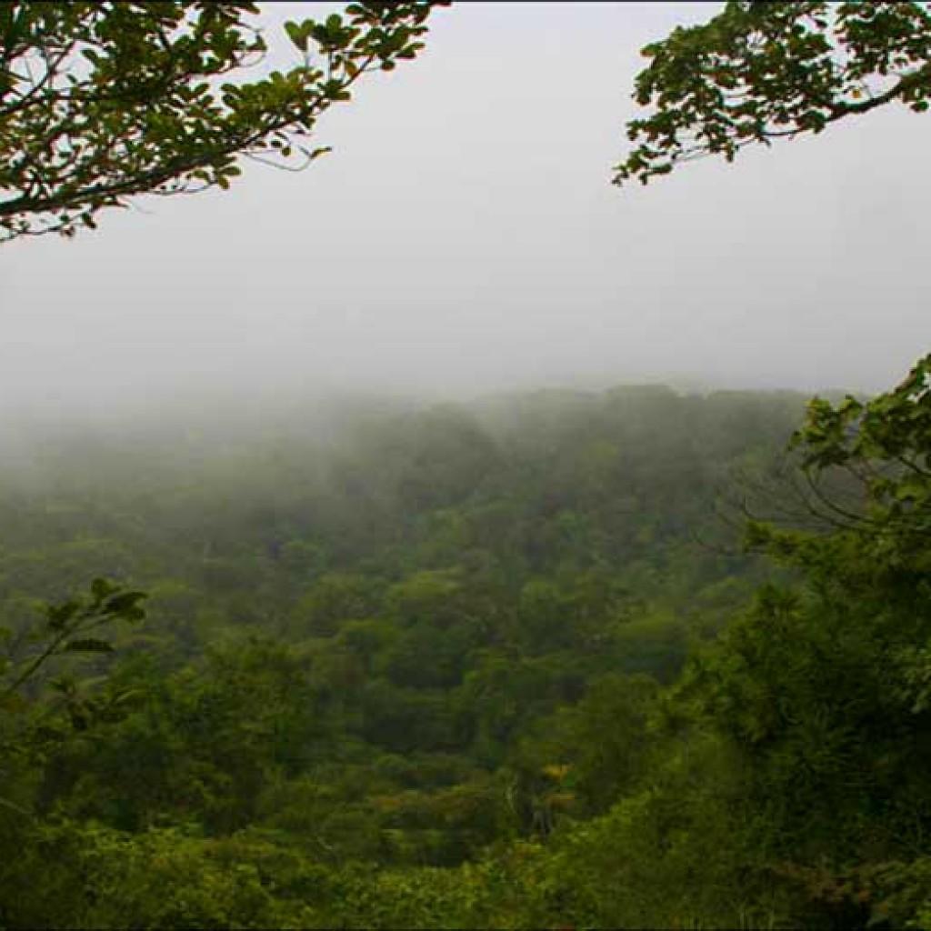 Montagne d'Ambre : La  merveilleuse fraîcheur de Madagascar