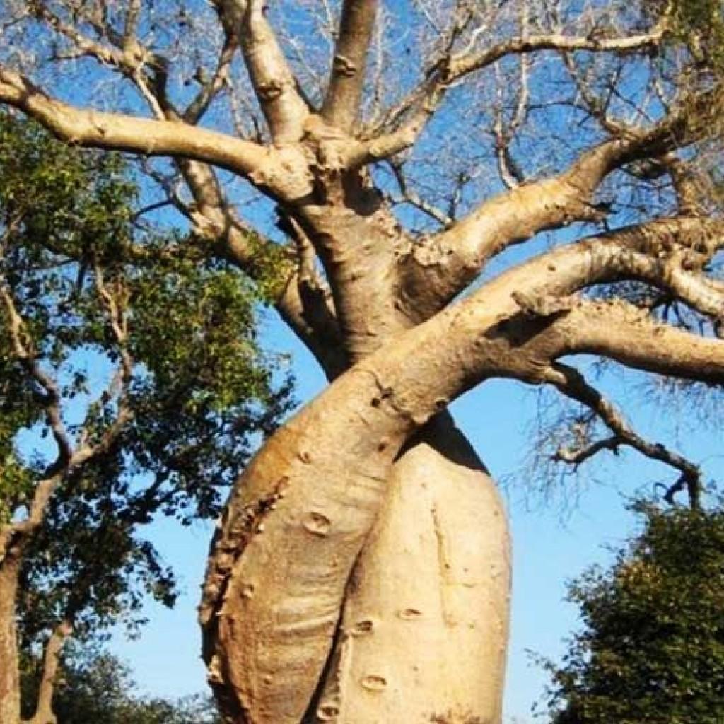 Morondava : Des  lieux incontournable à Madagascar
