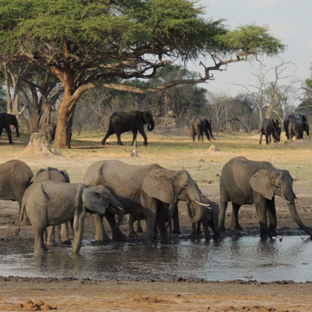 Un circuit inoubliable au cœur des terres sauvages zimbabwéennes