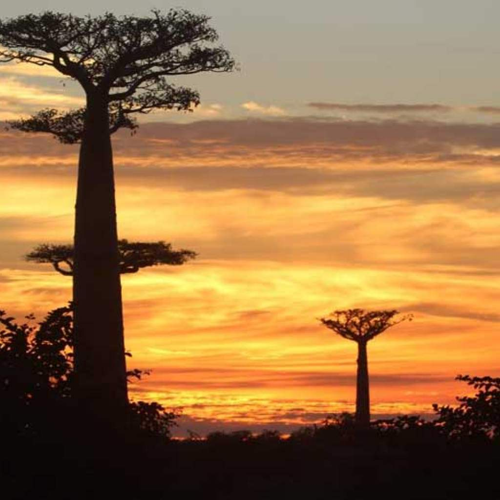 Book a hotel near the Alley of baobabs