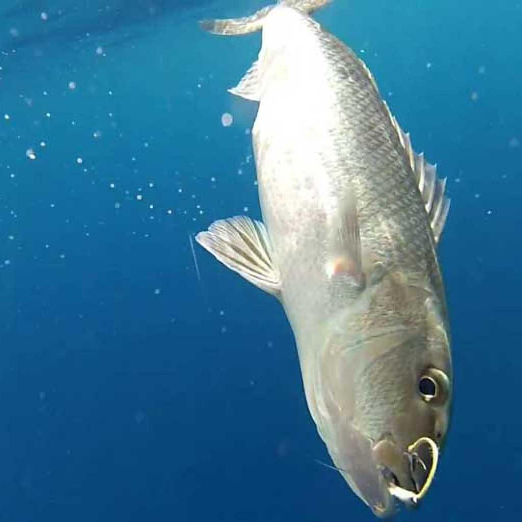 Deep sea fishing in Nosy-Be