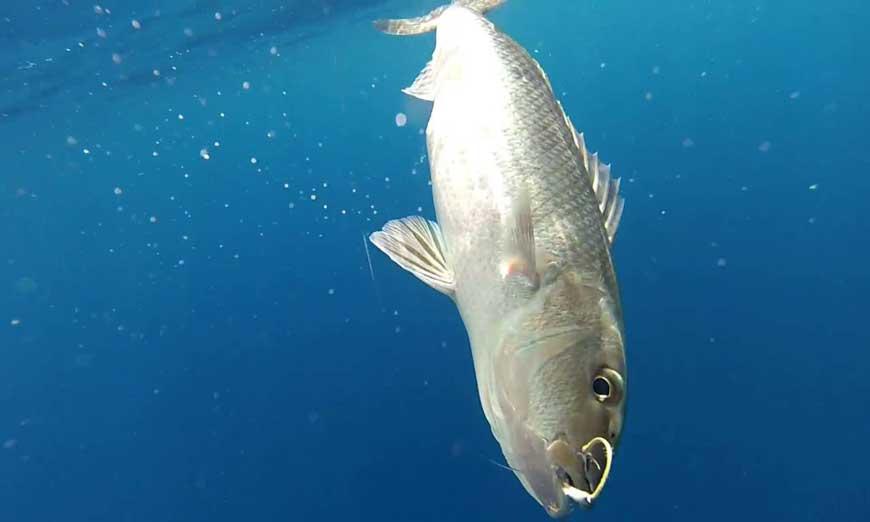 Pêche au gros à Nosy-Be
