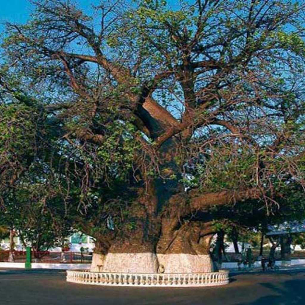 Les Top 5 des hôtels à Majunga