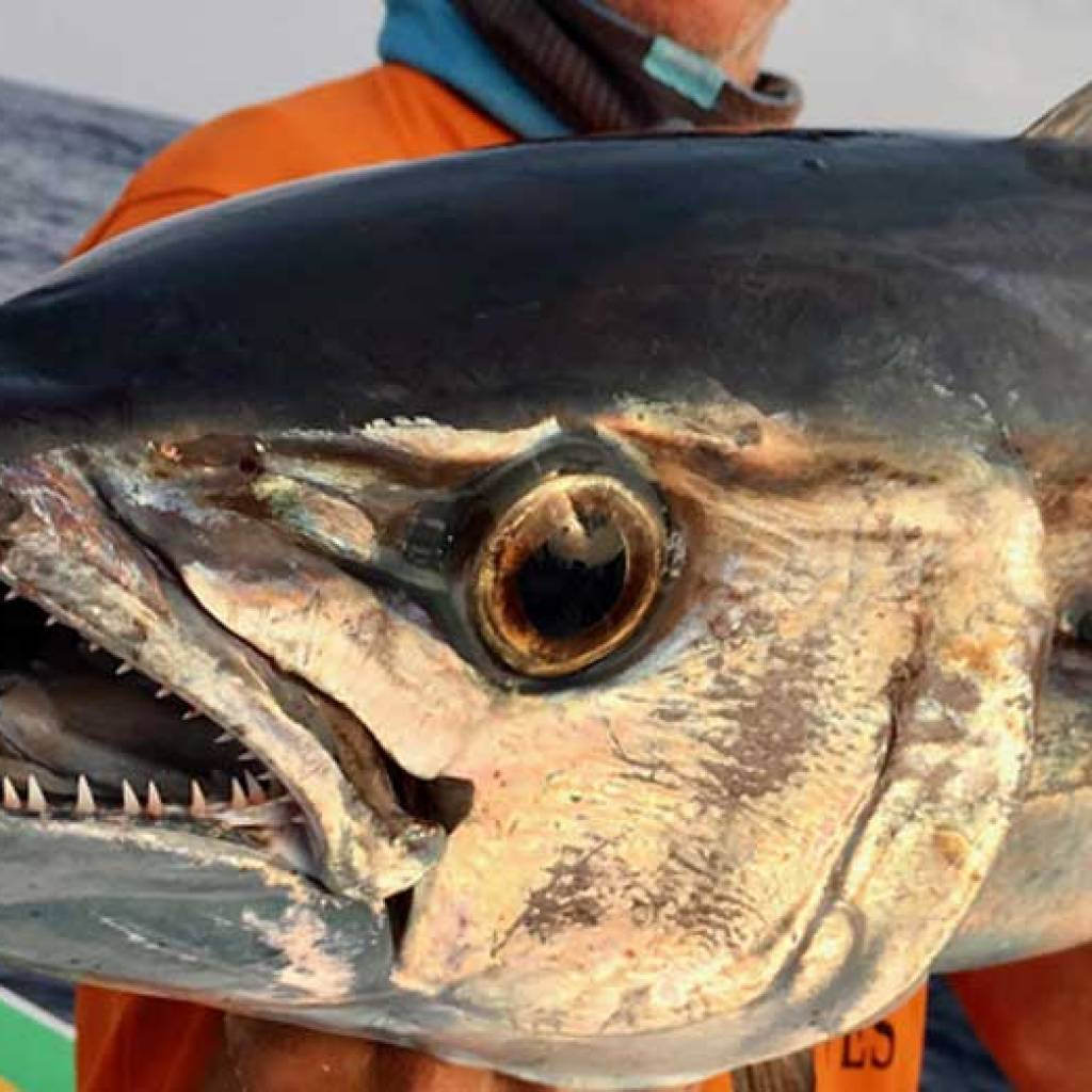Nosy-Be a paradise for deep sea fishing