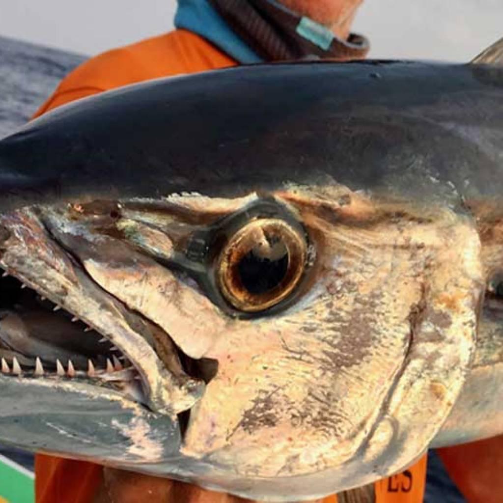 Nosy-Be un paradis pour la pêche au gros