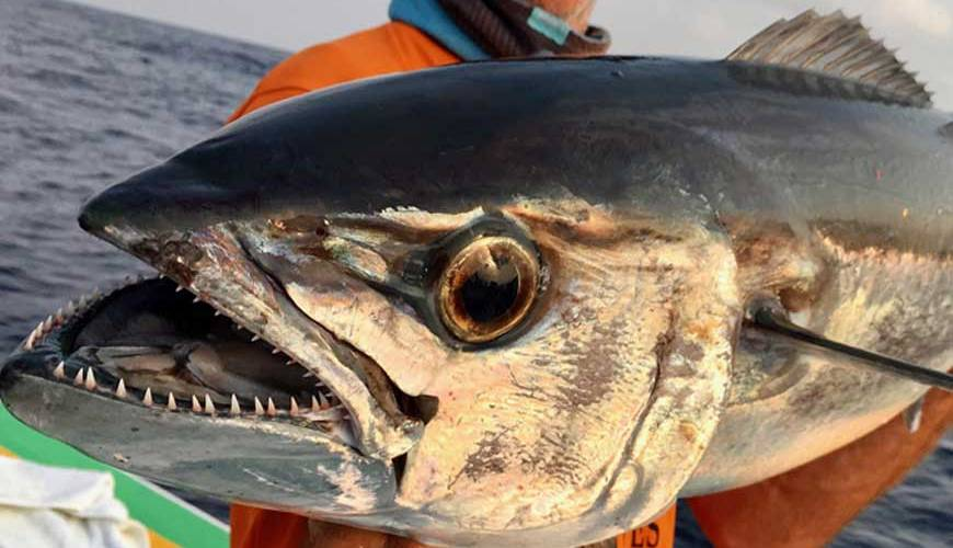 pêche sportive à Nosy-Be