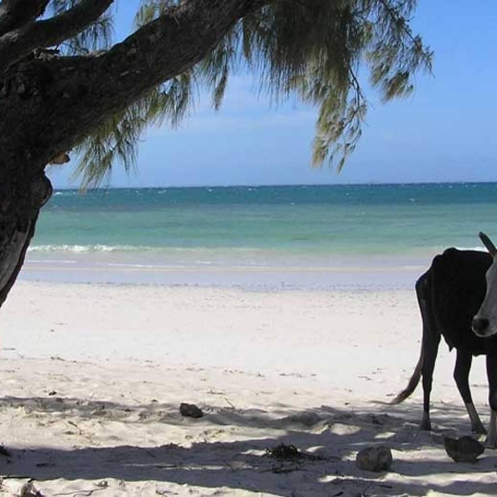 Madagascar, un paradis sur terre