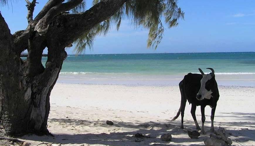 Madagascar un paradis