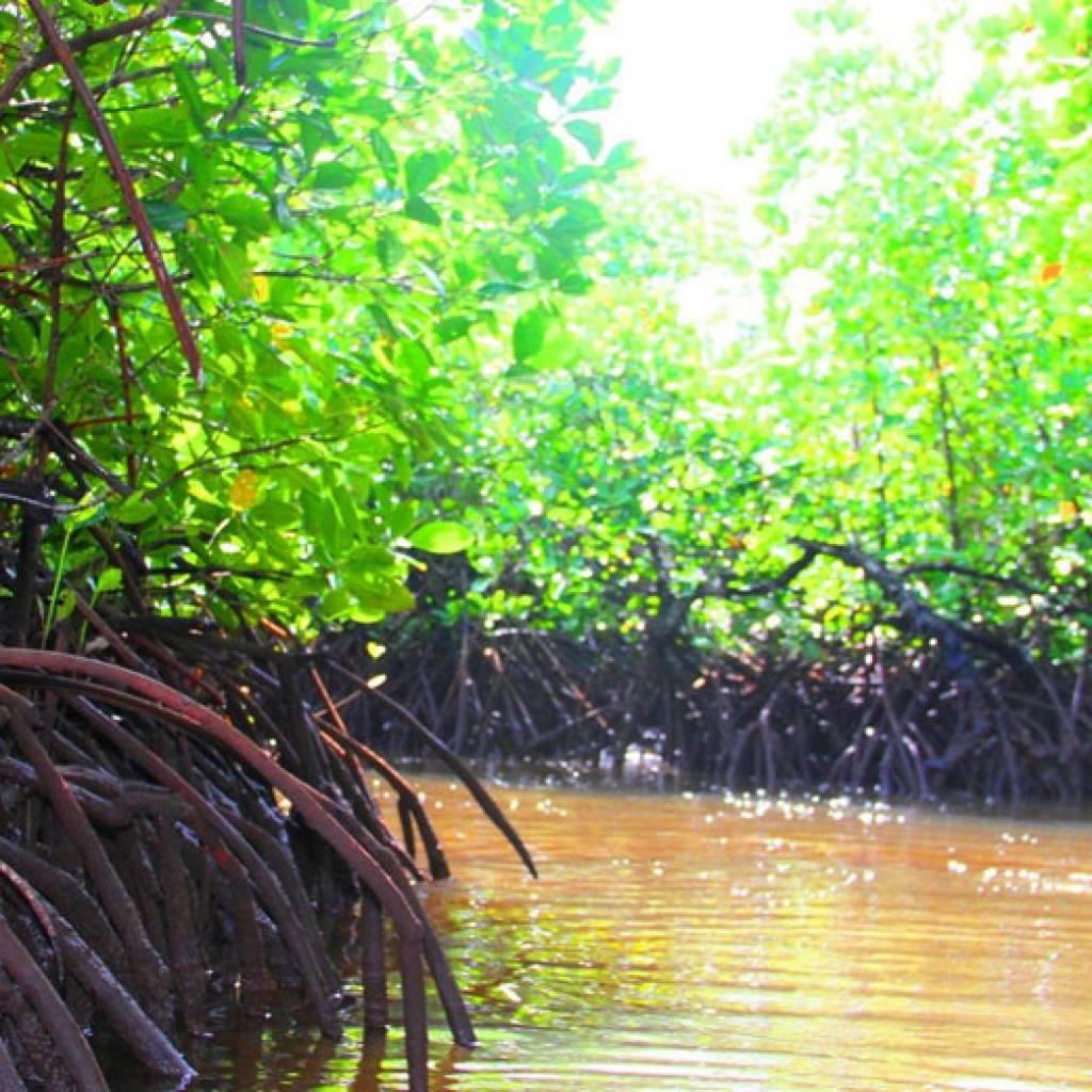 Sortie dans les mangroves