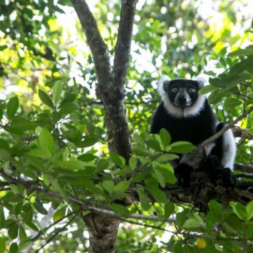 Discovering the lemurs of Madagascar